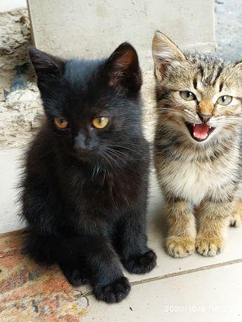 Віддам котики кошеня