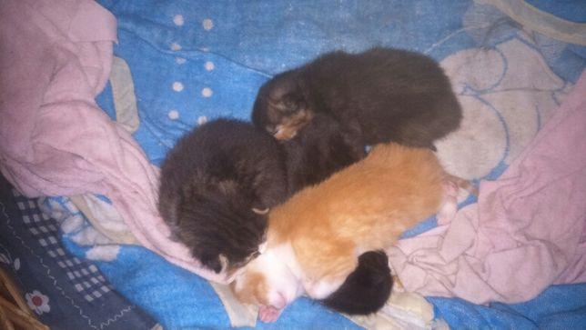 Oddam kotki/koty/kot w dobre ręce