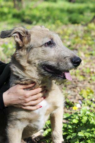 Крекер- очень необычный, классный щенок ищет дом