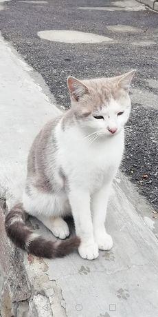 Знайдений котик сіро-білий