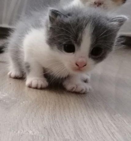 Котенок мальчик в добрые руки