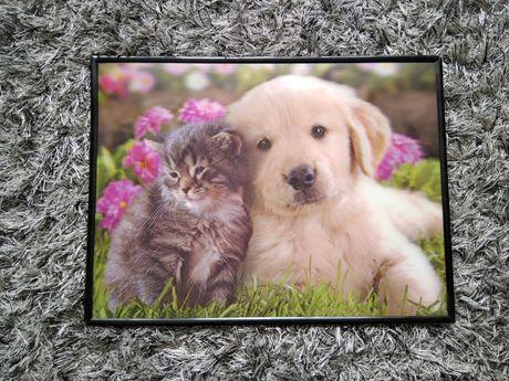 Obraz pies z kotem 30×40 cm