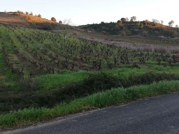 Propriedade 16320 m2 com Vinha e Árvores