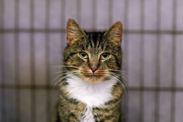Kot Ernest szuka domu