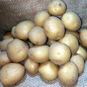 Картопля посадкова Гранада,Сюзана,Ред леді,королева Анна,Адретта, інші