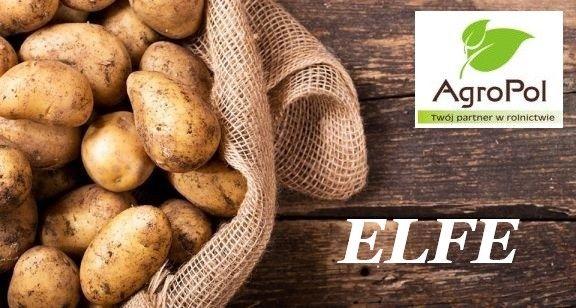 Ziemniak Sadzeniak ELFE Sadzeniaki Ziemniaka Sadzonki
