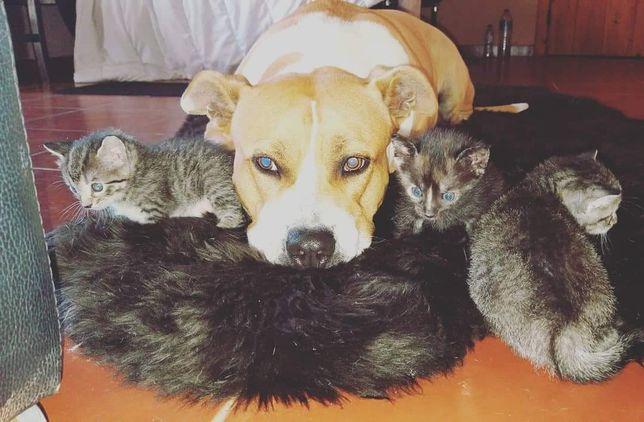 Tomo conta do seu animal/Hotel/Petsitting
