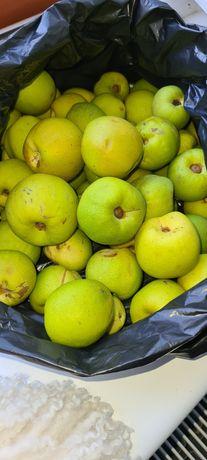 Owoce pigwy sprzedam 10zl kilogram