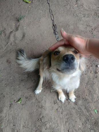 Отдам собаку в добрые руки.