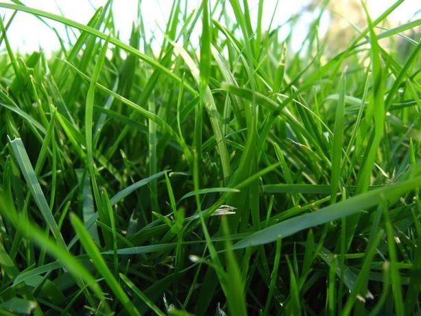 Oddam trawę na siano za darmo