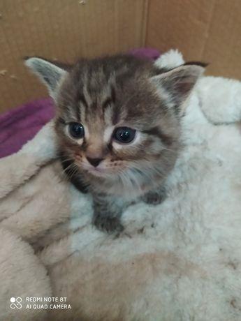 Kotki do oddania za około dwa trzy tygodnie
