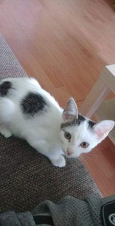 Oddam małego kotka w dobre ręce