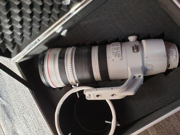 Canon 200-400 f4. Extander 1.4