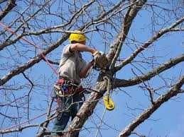 Спиливание деревьев. Удаление деревьев. Корчевка пней. КИЕВ
