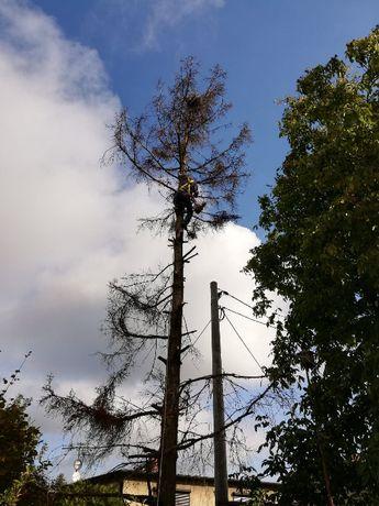Wycinka drzew i krzewów wywóz gałezi