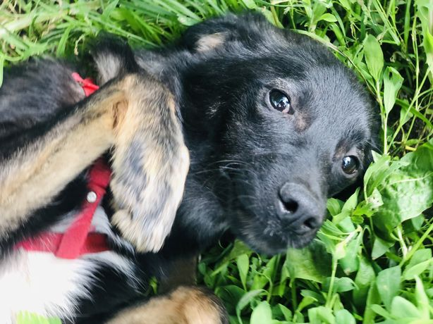 Добрый щенок Бакс ищет дом