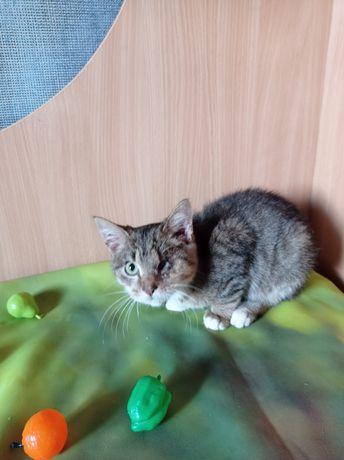 Особенный котенок Марик