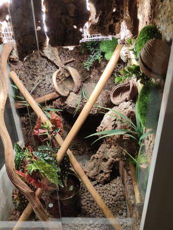 Terrarium dla gekona jaszczurki