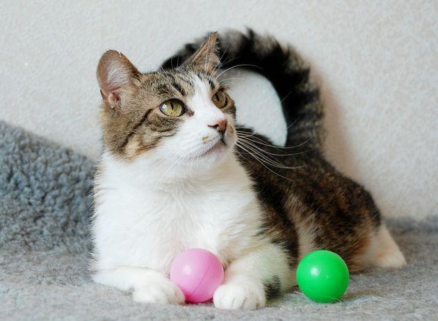 Котик-компаньйон Сеня шукає свою родину