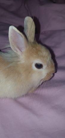Декоративный кролик. Карликовый кролик. Подарок