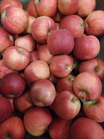 Sprzedam jabłka idared