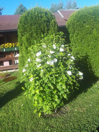Ogród działowy !!!