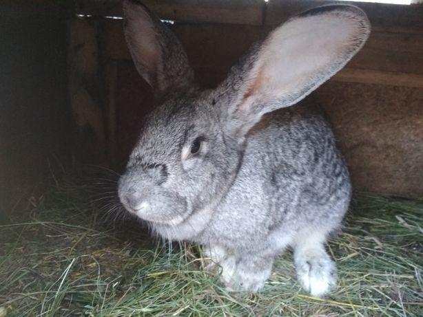 Продам кролей самок