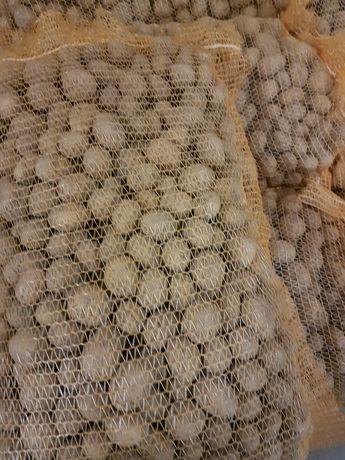 Ziemniaki Sifra Madeira Ignacy Arizona