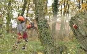 wycinka drzew trudno dostępnych