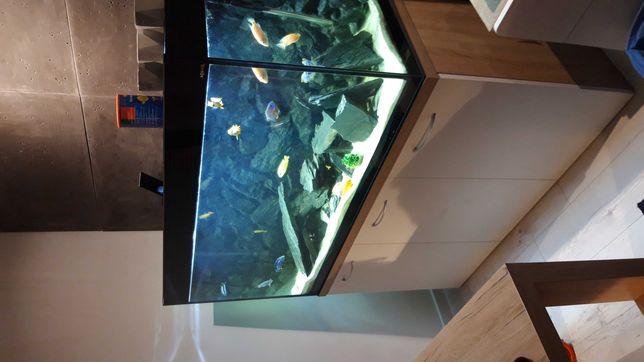 Aquael glossy 260 litrow akwarium