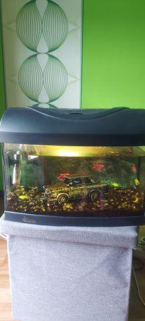 Akwarium Diversa z pełnym wyposażeniem