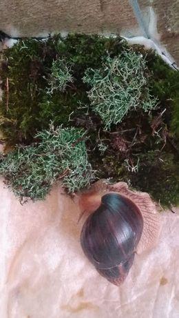 Мох для улиток ахатин и архахатин , а также для растений