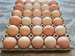 Jaja świeże od kur