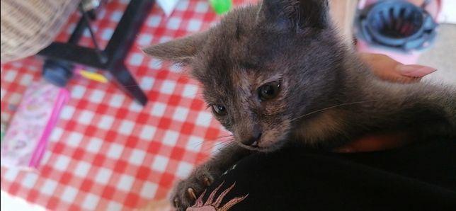 Adoção bebé gatinho