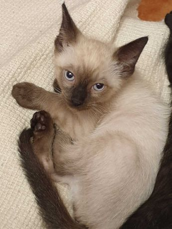 Lindos gatinhos com 50 dias, para adoção por pessoa responsável.