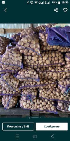 З.а.к.у.п.к.а. картошка , картофель