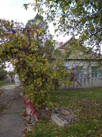 продам дом в Балках