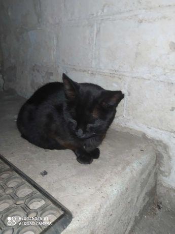 Кошка черная мышеловка