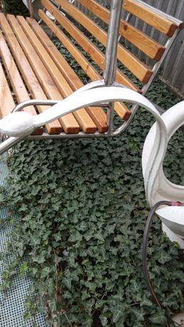 Плющ садовый вечнозелёный