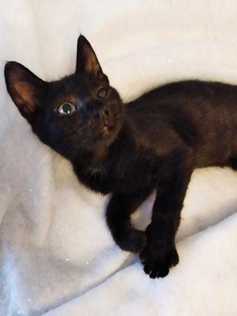 Котята  черные серые черно-белые отдам в хорошие руки