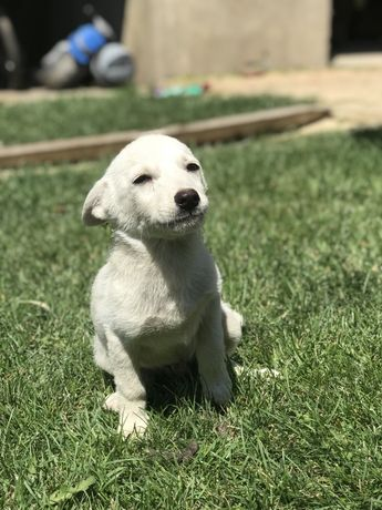 Отдадим даром щенка