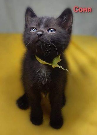 Отдам чёрного котенка , девочка , 1,5 месяца