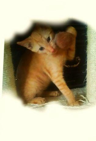 Kocie dziecko do adopcji