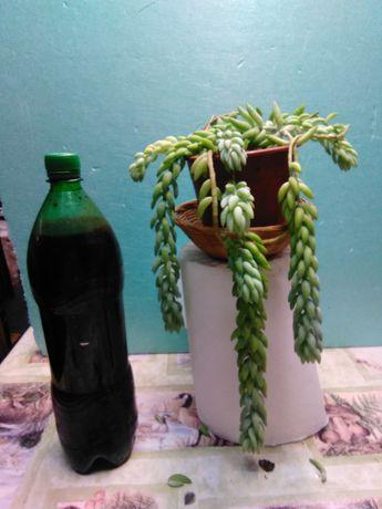 Vendo Húmus Líquido de Minhocas para plantas exprente
