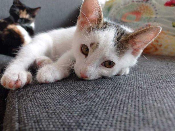 Zostań domem tymczasowym dla kociąt
