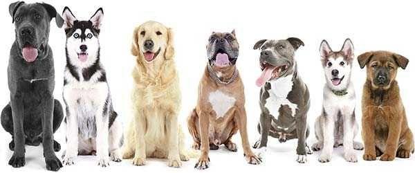 Pet sitting* Passeamos e cuidamos do seu animal*