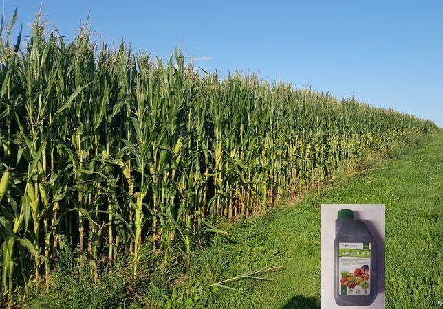 Nawóz na Kukurydzę Rzepak Trawy Zboża Warzywa Dolistnie