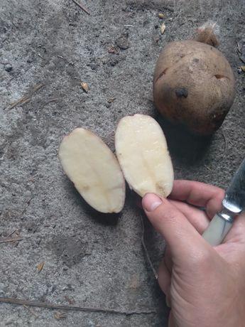 Продам 1 т.картоплі