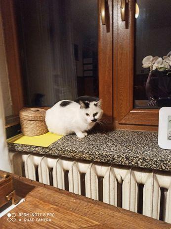 Oddam śliczną kotkę w dobre ręce