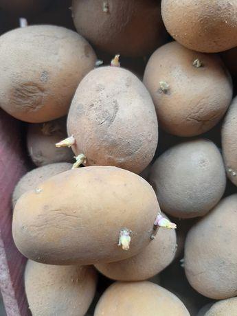 Картошка,картофель